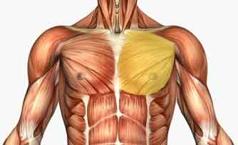 Chest Muscles Structure Injury Diseases Pain Exercises
