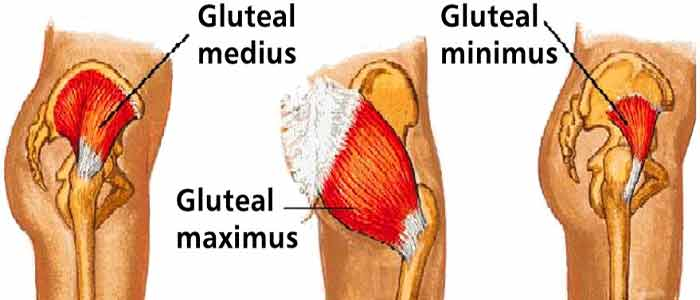 glutes structure