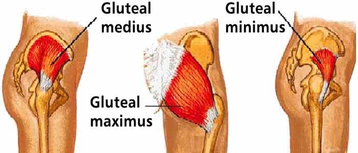 Glutes Muscle  U2013 Structure  Strain  Exercises  U0026 Grades